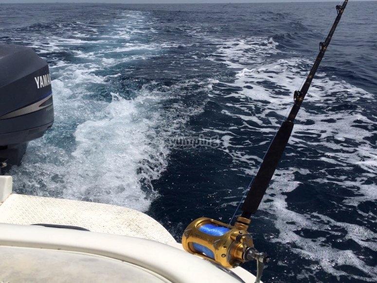 Nos vamos alta mar