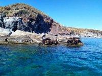 Leones marinos en Isla Coronados