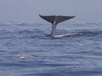 Expedición para la búsqueda de ballenas