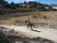 Horse trotting