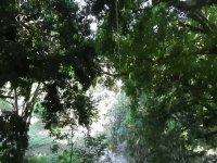 Through the jungle in jalcomulco