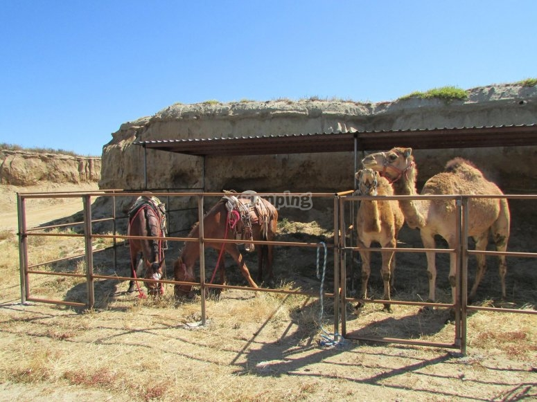 Caballos en Rosarito