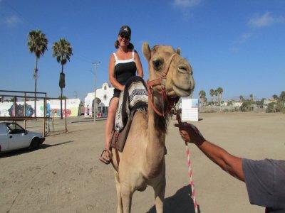 Camel riding tour in Rosarito 15 min
