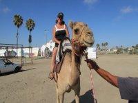Paseo en Camello en Rosarito 15 minutos