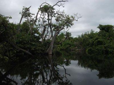 Tour San Blas jungla la Tovara