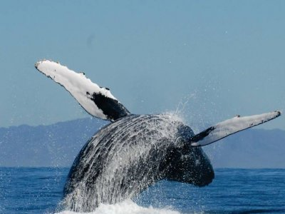 Whale watching tour in Tepic, Nayarit