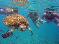 Snorkel con tortugas Akumal