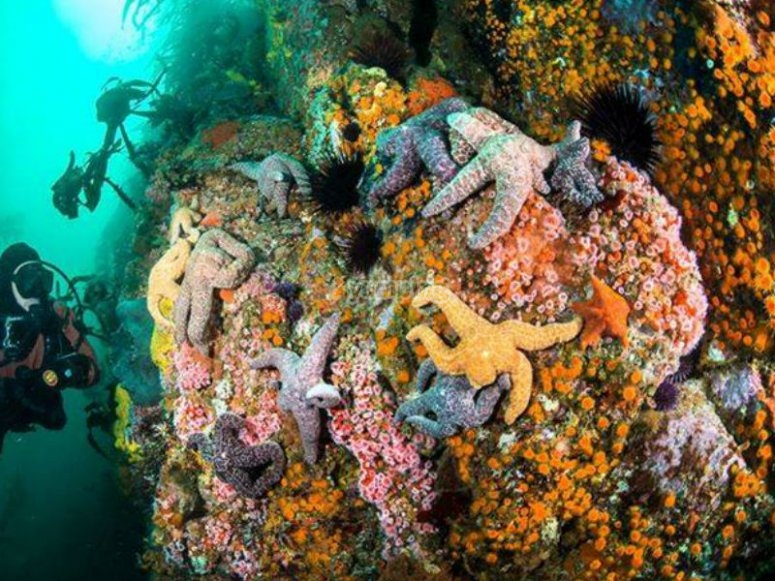 Descubre las bellezas submarinas de Baja California