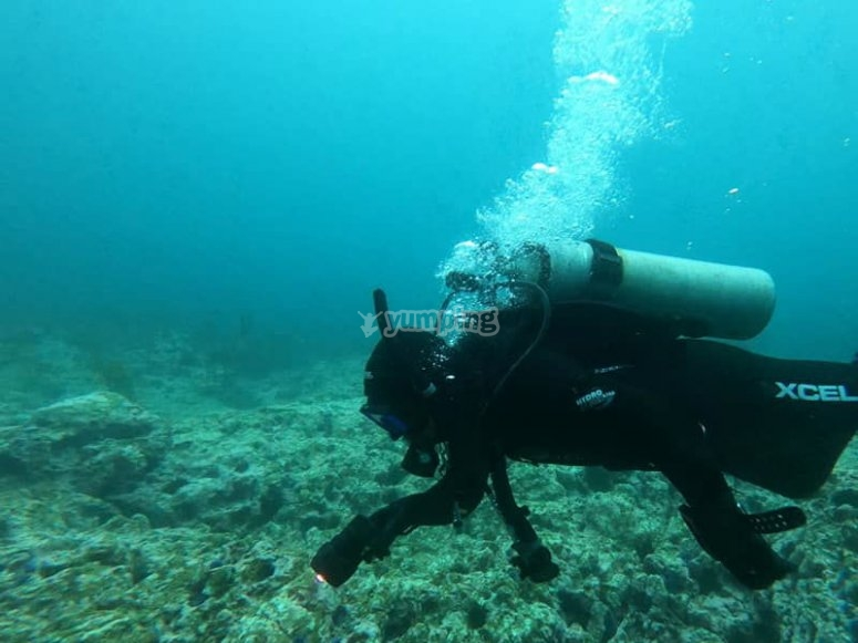 Descubres las maravillas de las profundidades buceando