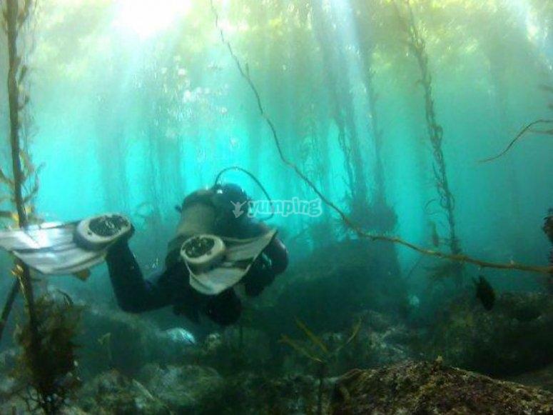Paraísos naturales debajo del agua
