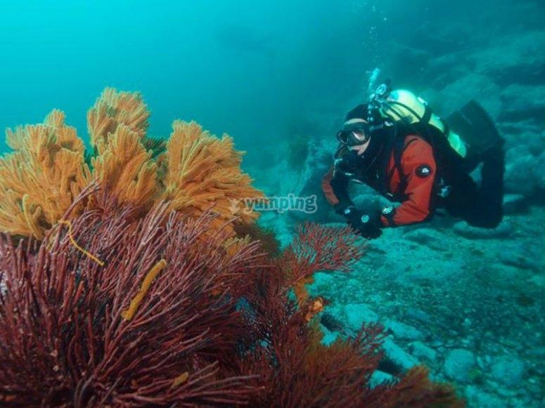 Descubriendo la belleza de las profundidades de Rosarito