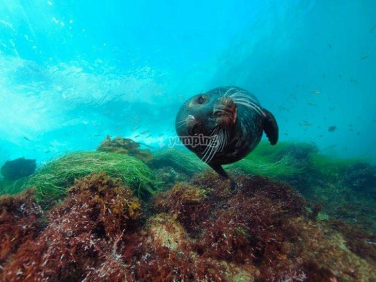 Vida submarina en Rosarito