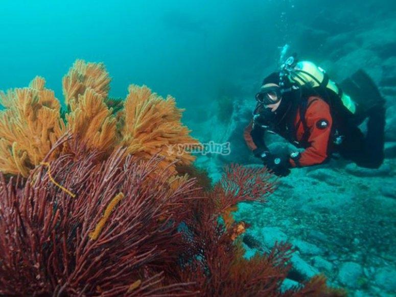 Explora la belleza bajo el mar de Rosarito
