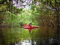 Kayak por manglares