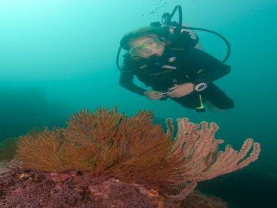 Rocío del Mar Liveboard