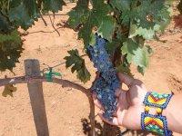 Touching the grape