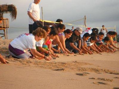 Liberación de tortugas marinas en Tepic 12 horas