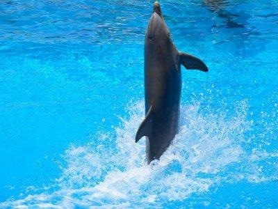 Playa del Carmen Tours Nado con Delfines