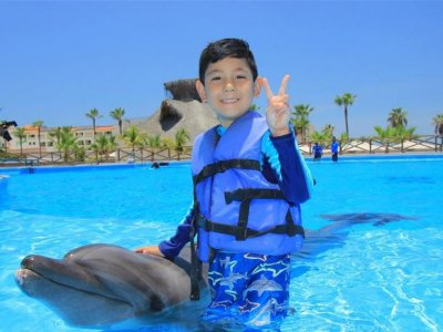 Swimming with dolphins in  Baja California