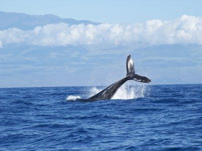 Whale watching trip in Nuevo Vallarta