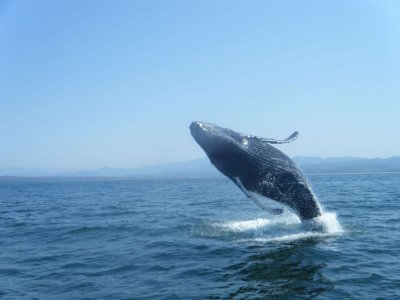 Whale watching tour kids, Nuevo Vallarta