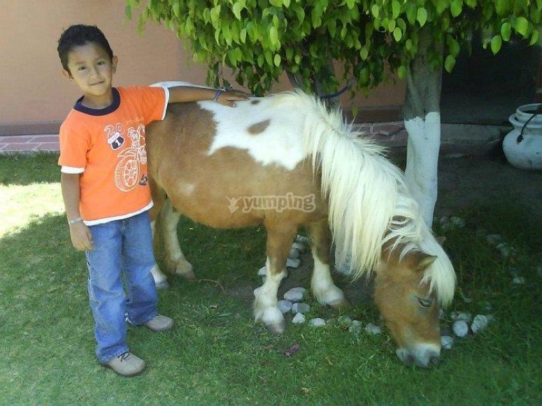 Pony en casa