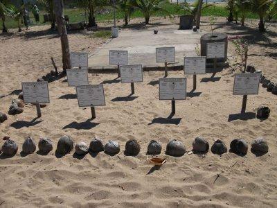 Libera tortugas marinas Rincón de Guayabitos