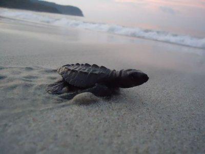 Libera Tourtugas marinas precio niño Rincón de G.