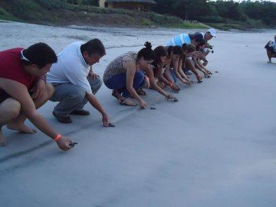 Libera tortugas marinas salida Nuevo Vallarta