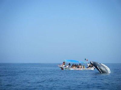 Avistamiento ballena+snorkel isla Coral, Guayabito