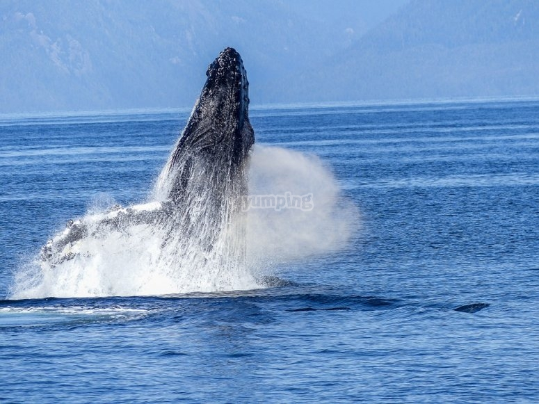 Avistamiento de ballenas desde guayabitos
