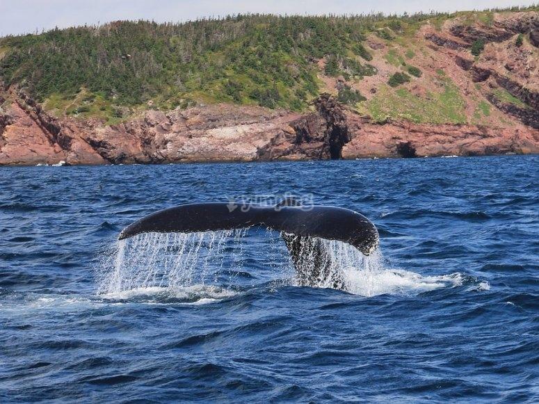 Conoce a las ballenas del pacifico