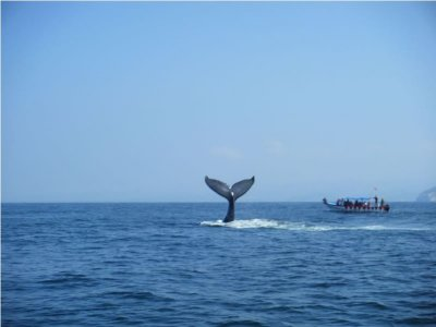 Whale watching kids offer in Guayabitos