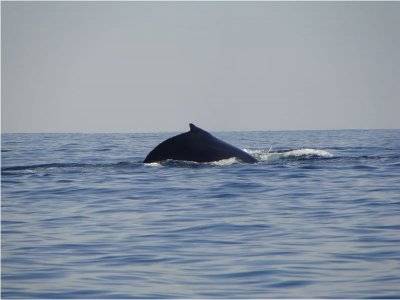 Whale watching leaving from San Blas