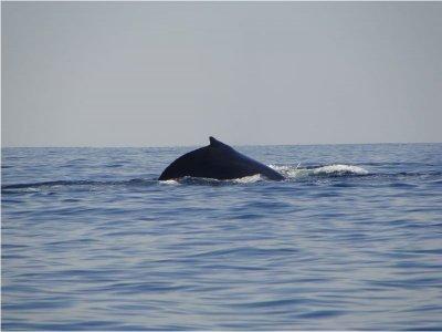 Avistamiento de Ballenas Salida San Blas