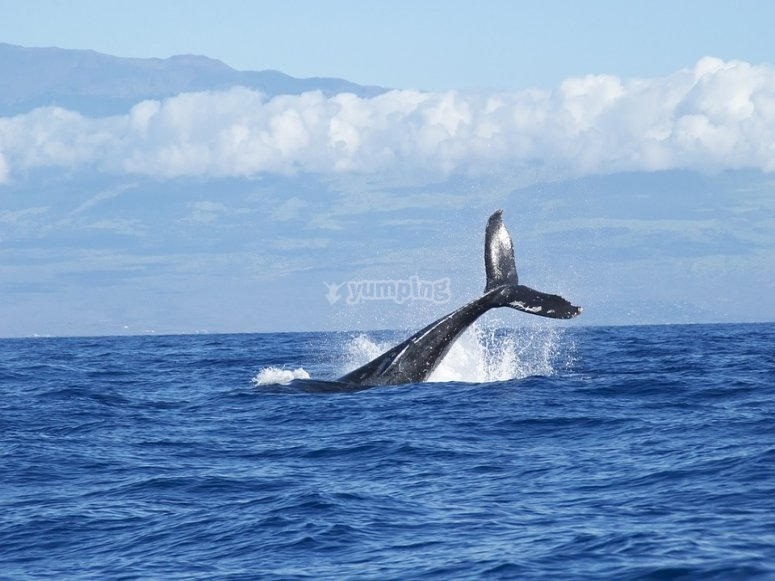 Ballenas del pacifico