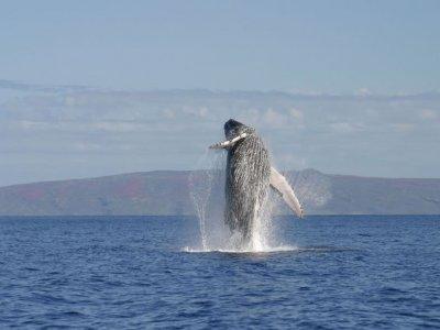 Whale watching kids rate San Blas