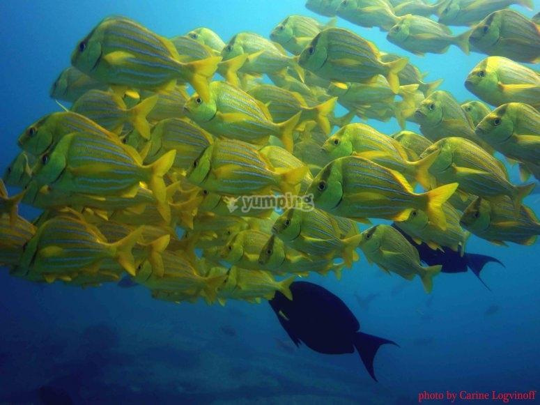 Nada y haz snorkel con los peces