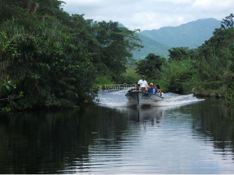 Route into the jungle