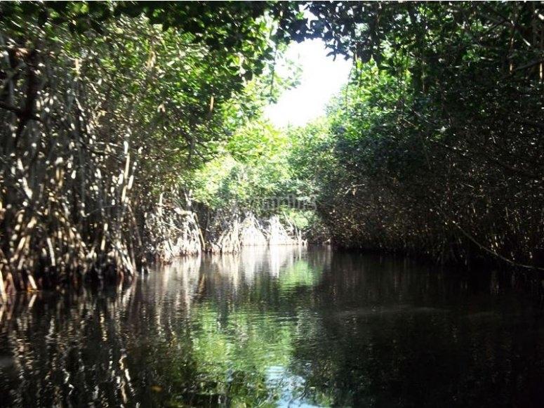 Visit the mangrove