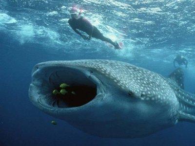 Blue Dream Cozumel Snorkel
