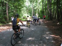 Cycling between forest paths