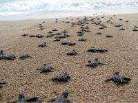 Hermosa experiencia con tortugas