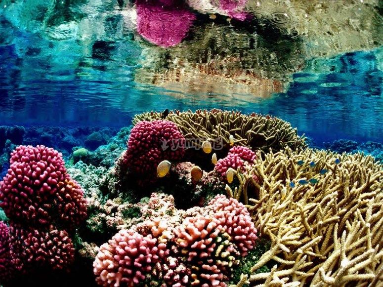 Corales en Arrecife Cancún