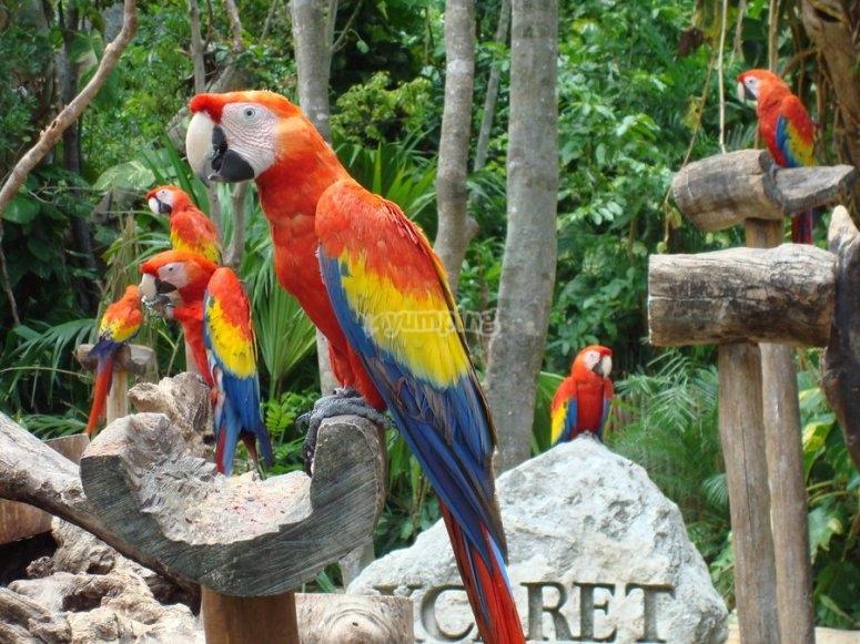 Guacamayas de colores