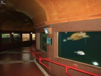Underwater exhibition