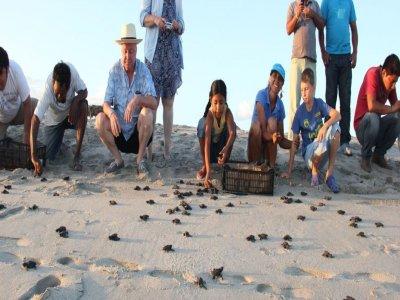 Liberación de tortugas en Huatulco 3 horas