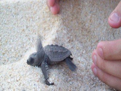Liberación de tortuga marina en Huatulco niños
