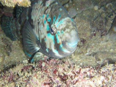 Snorkel nocturno y bioluminiscencia en Huatulco