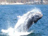 Visita a la ballena jorobada